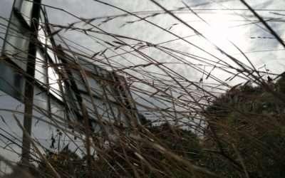 L'Art Contemporani com a resposta a la degradació de l'entorn